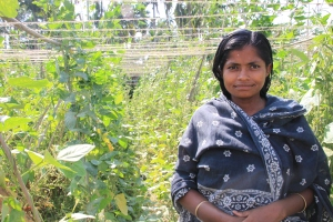 Indian woman in the field